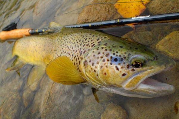 Pêche à la mouche en Haute Loire