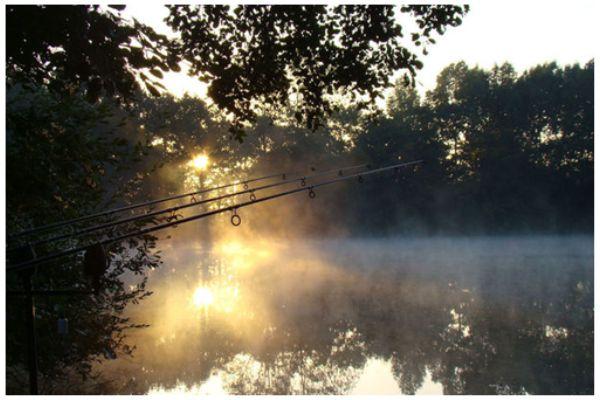 Pêche à la carpe dans le Maine et Loire