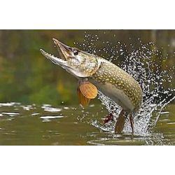 Pêche dans le Maine et Loire