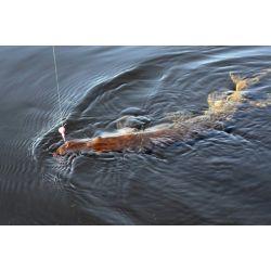 Pêche en Maine et Loire