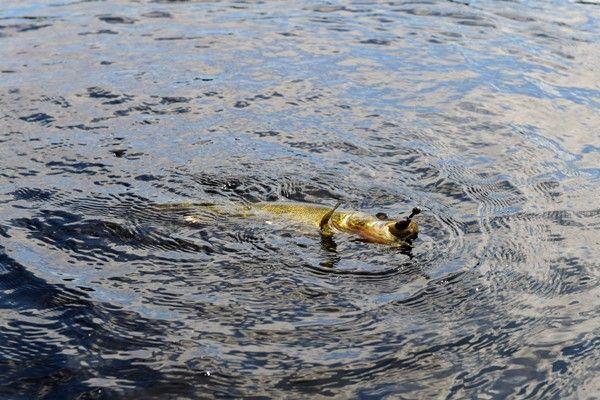 Pêche aux Carnassiers en Dordogne