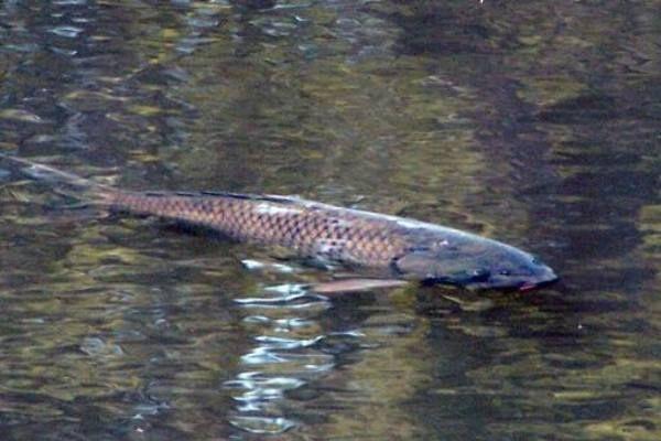 Pêche à la carpe  en Dordogne